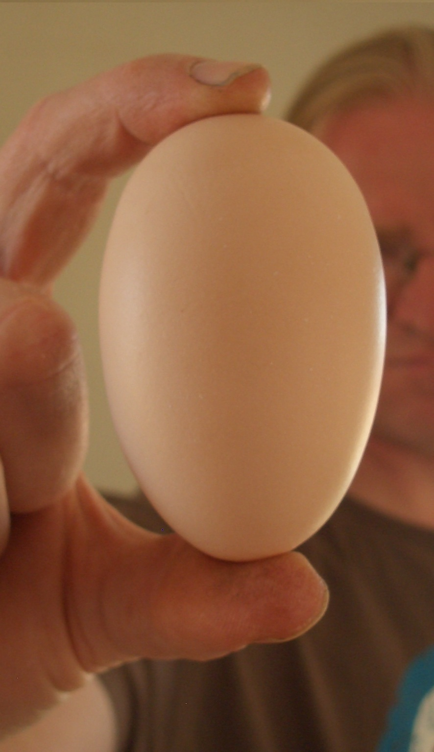 Photo of egg